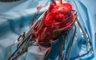 Chirurgia weterynaryjna