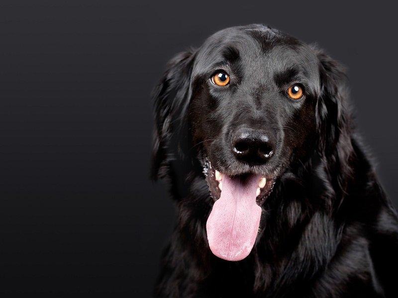 Pies na badaniu