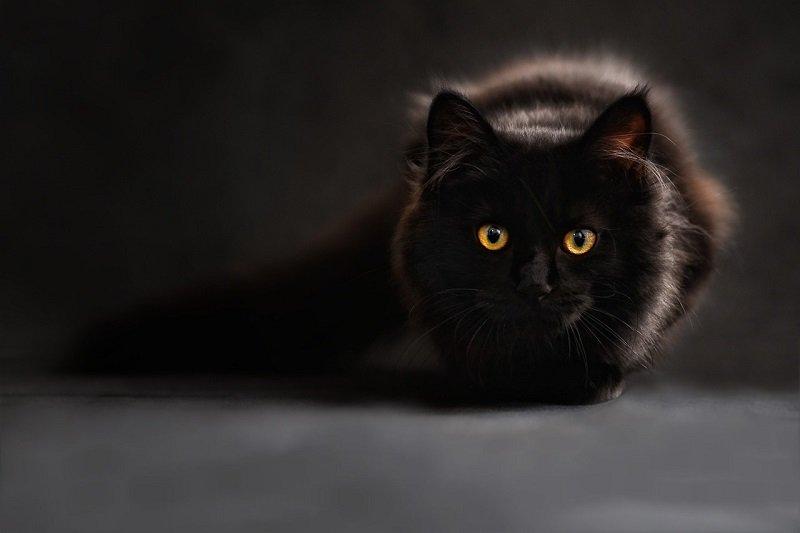 Zabierz kota na badanie