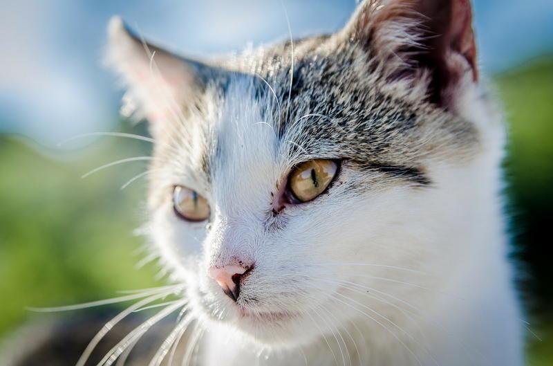 Gastroskopia weterynaryjna dla kota
