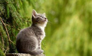 Kot - czy warto czipować