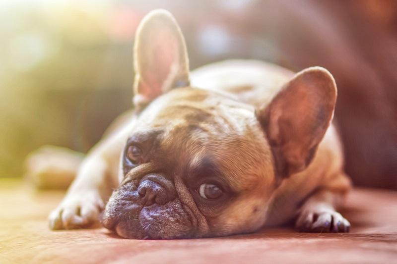 Jeśli Twój pies ma objawy neurologiczne, koniecznie zabierz go na wizytę w klinice weterynaryjnej