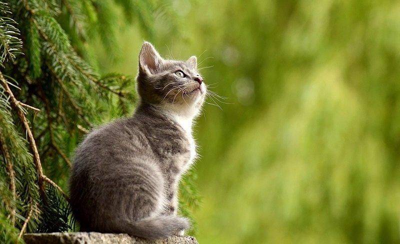 Młody kot na pniu drzewa