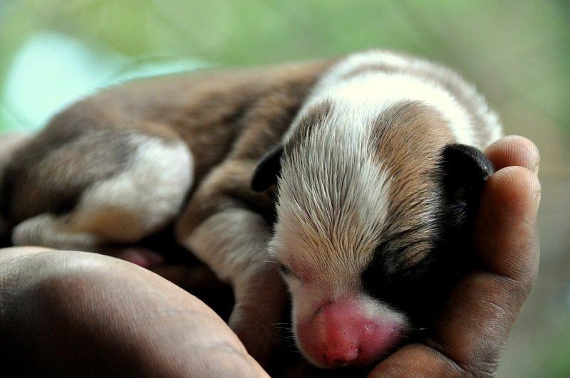 Nowo narodzony szczeniak